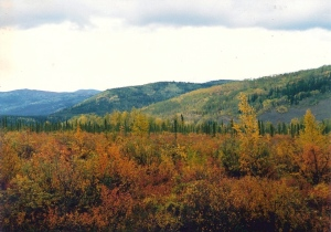Fall on the Muskeg