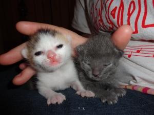 Cedar's Kittens