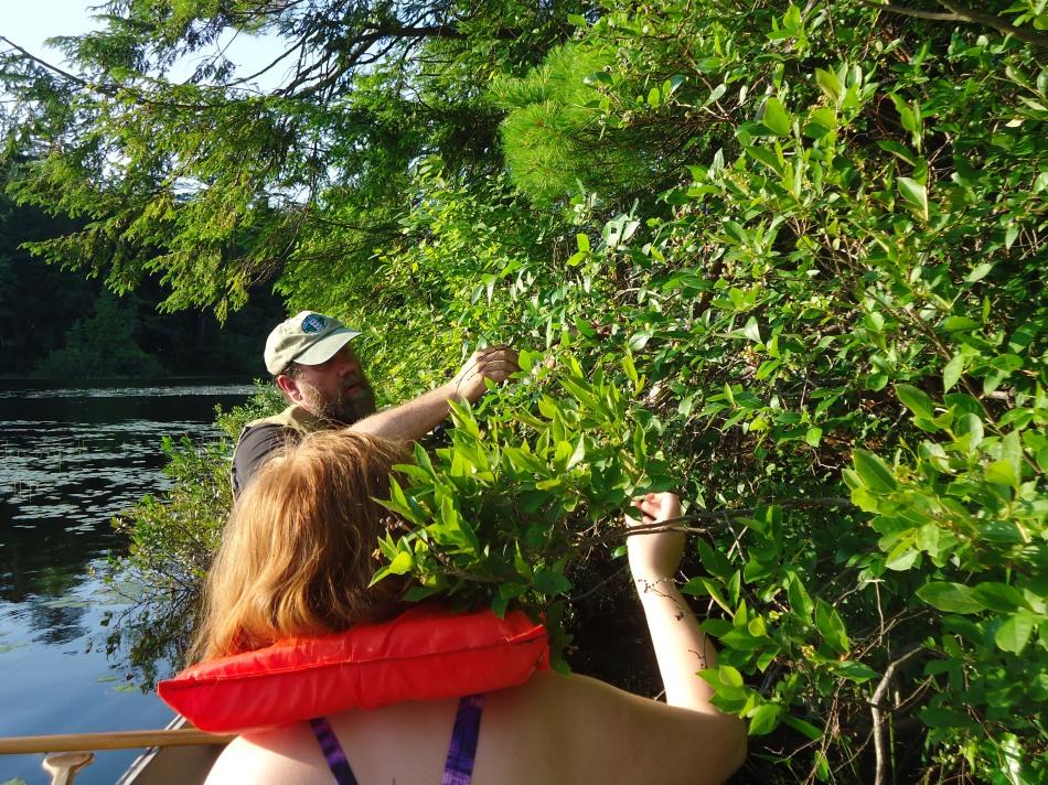Canoe harvest