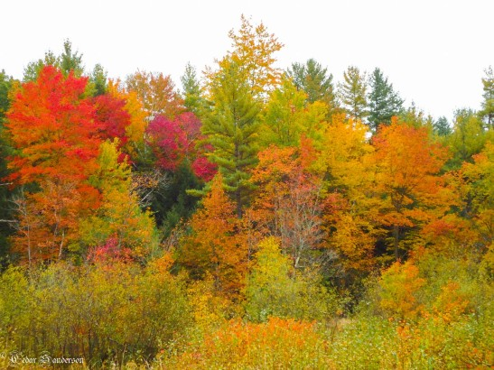 New Hampshire Fall Color: somewhere in Sanbornton