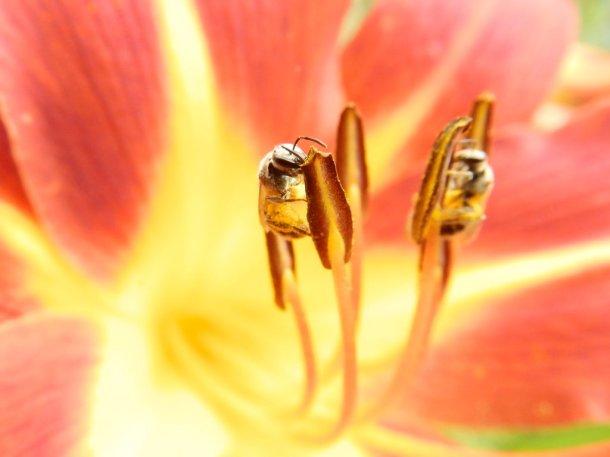 pollinators_by_cedarlili-d7sh46c